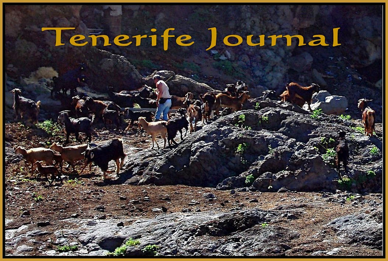 Tenerife Journal