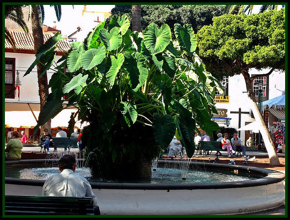 pond in plaza charco