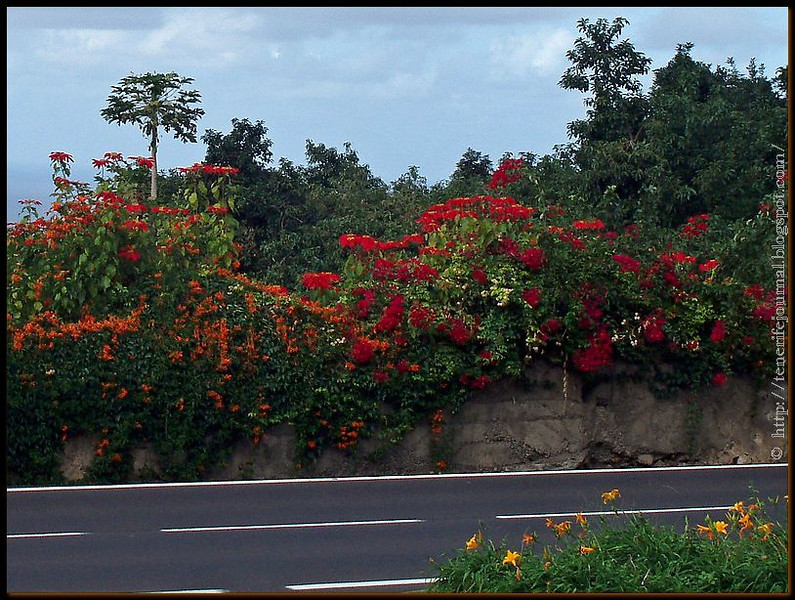 flowers along road