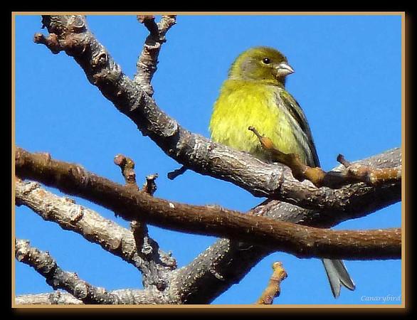 2012 Tenerife Journal Blog